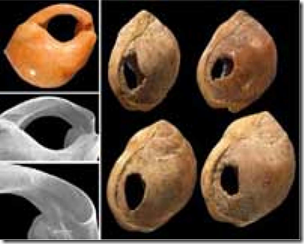Fig 2 Pierced shells Blombos Cave 75kya indicating external symbolisation and use of string